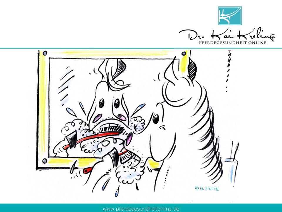 Zahnpflege beim Pferd – Was ist notwendig?