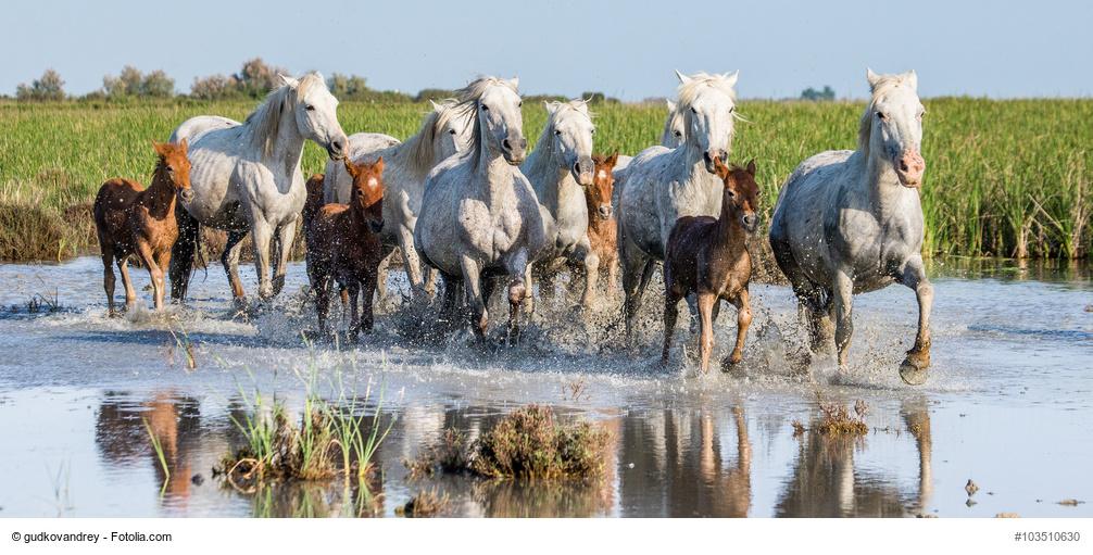 Pferdewissen von A bis Z